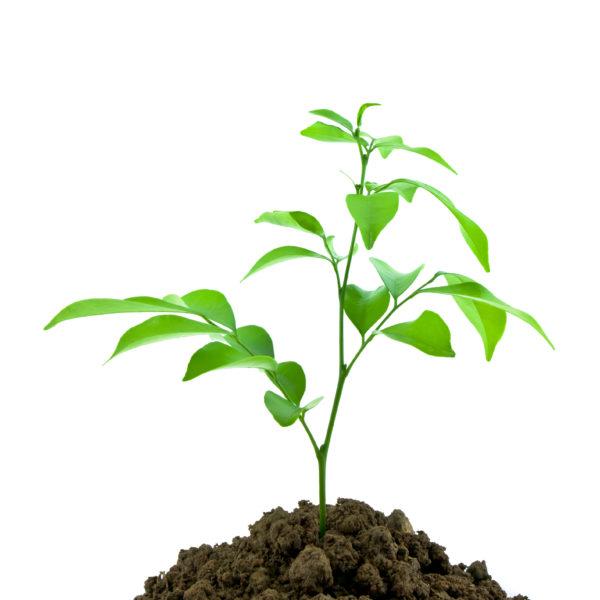 Donasi pohon